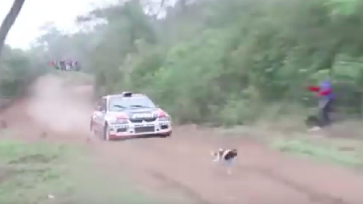 Vídeo: el afortunado perro que sobrevive en un rally