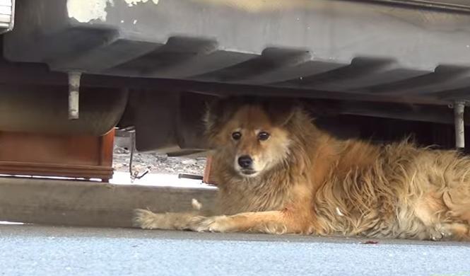 Google Maps: así ayudó a salvar a una perrita abandonada
