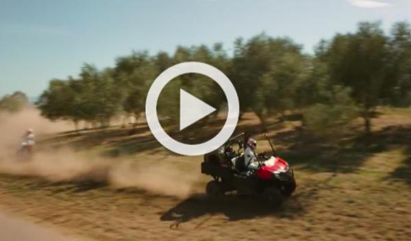Vídeo: Alonso y Button, duelo entre viñedos